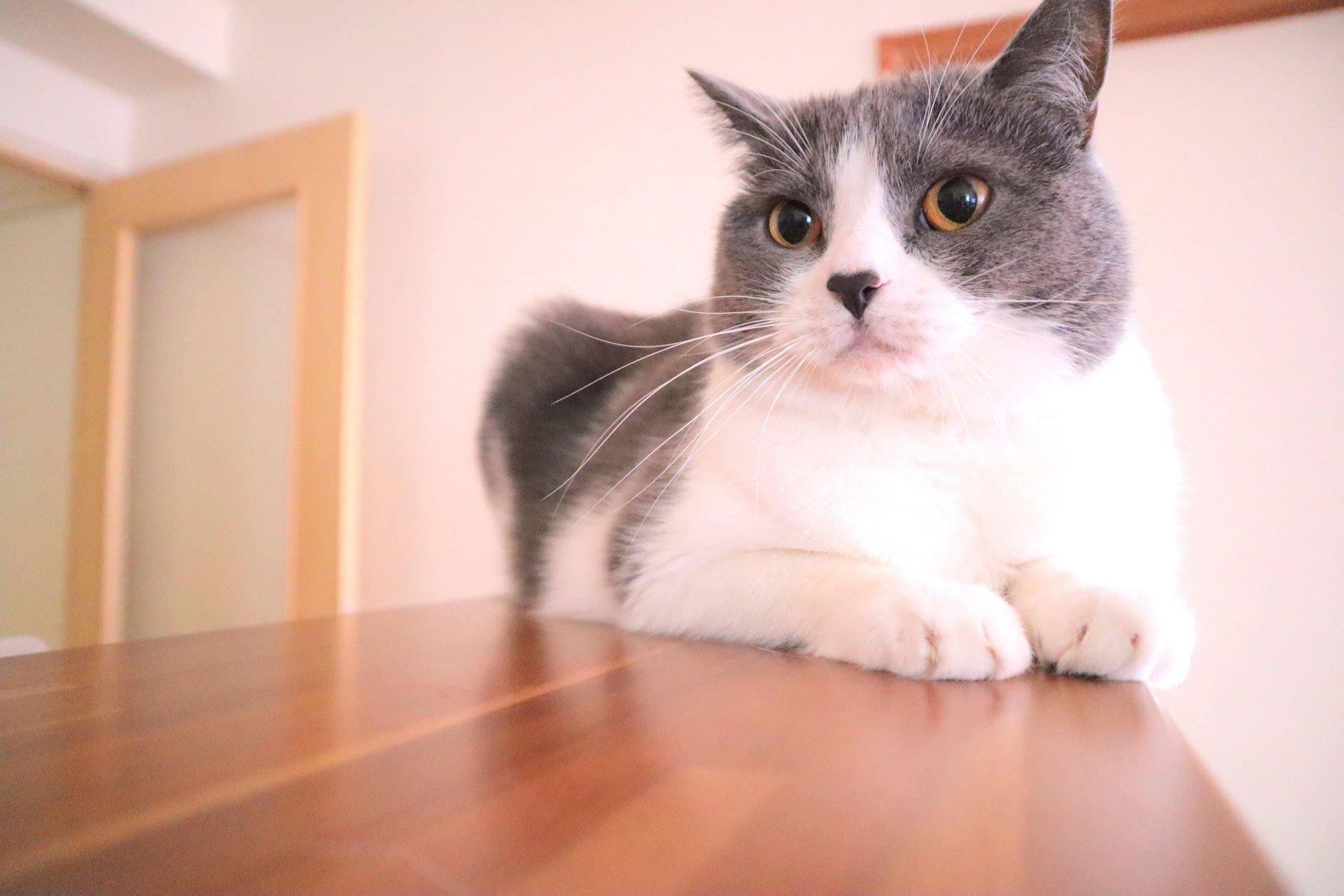 catday_01.jpg